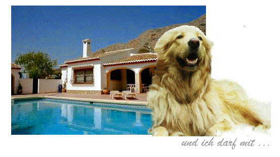 Costa Blanca Mit Hund Ferienhaus Hund Erlaubt In Spanien